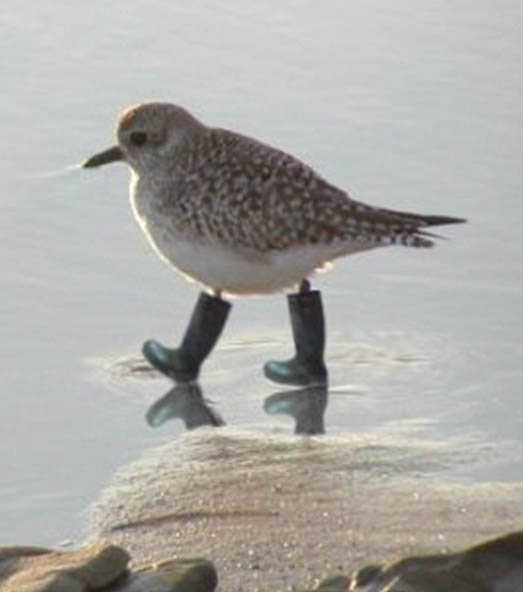 Pajaro con botas